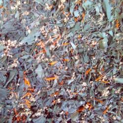 Tisane d'automne